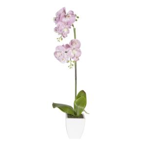 Heleroosa orhidee 1x IN GARDEN