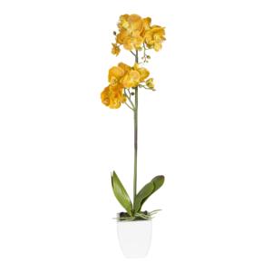 Kollane orhidee 1x IN GARDEN