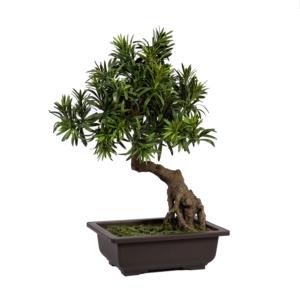 Bonsai IN GARDEN H45cm
