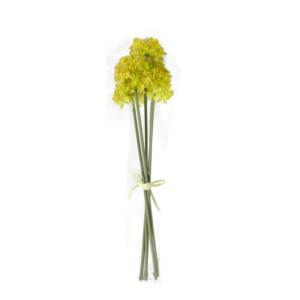 Allium 5x IN GARDEN